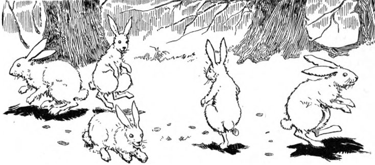 Bunny Rabbits Hopping In The Forest Coloring Page