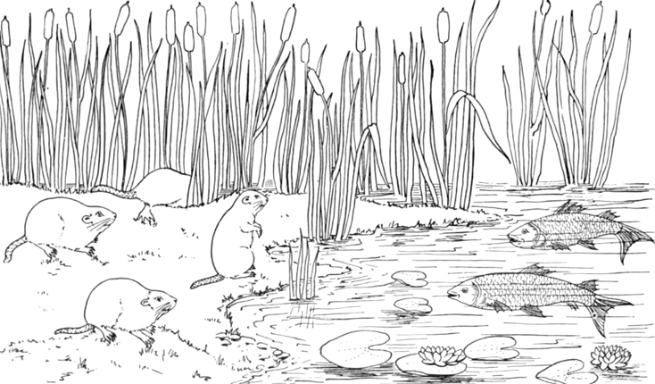 The Burgess Animal Book for Children Coloring Page