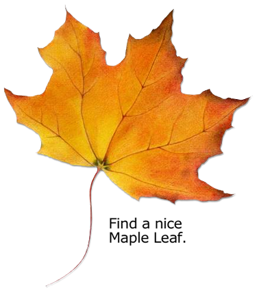 Find a nice maple leaf.