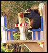 Squirrel   Café Beginners Wood Project
