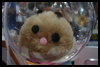 Craft   Hamster How-To
