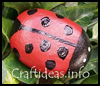 Rock   Lady Bug