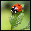 How   to Make a Ladybug Out of Styrofoam