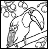 Toucan Coloring Page for Kids