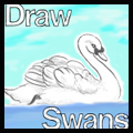 How to Draw Swans