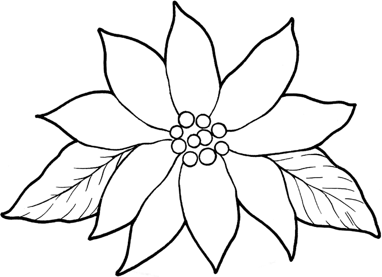 This is a graphic of Unforgettable Poinsetta Coloring Page