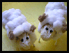 Wild and Wooly Sheep / Rams