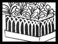 Tin Can Gardens