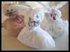 <strong>Easy   Plastic Bag Rabbit   : Crafts with Cellophane Activities for Children</strong>