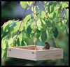 Tray   Bird Feeder
