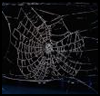 Preserve   a Spider Web  : Halloween Spider Web Crafts for Kids
