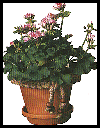 Macramé Flower Pot Craft for Children