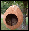 Coconut Birdhouse . : How to Build Bird Feeders and Houses