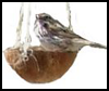 Coconut Bird Feeders . : How to Build Bird Feeders and Houses
