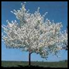Popcorn   Trees in Bloom  : Arts and Crafts Projects with Popcorn