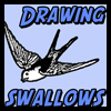 How to Draw Swallows