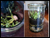 Terrarium   Preschool Nature Craft