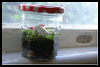 How   to Crochet a Hanging Terrarium Planters   : Making Terrariums Instsructions for Children