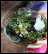 Shakespeare for kids (Shakespeare globe terrariums)