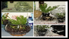 Terrariums for Everyones : Terrariums and How to Make Them Directions