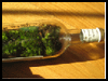Moss-age in a bottles : Terrariums and How to Make Them Directions