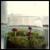 Terrarium   for Kids