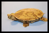 How    to Make a Duct Tape Turtle