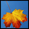 Fall   Leaf Crafts with Preschoolers