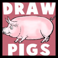 Drawing Pigs