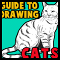 Guide to Drawing Cats