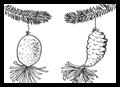 Pinecone Christmas Decorations
